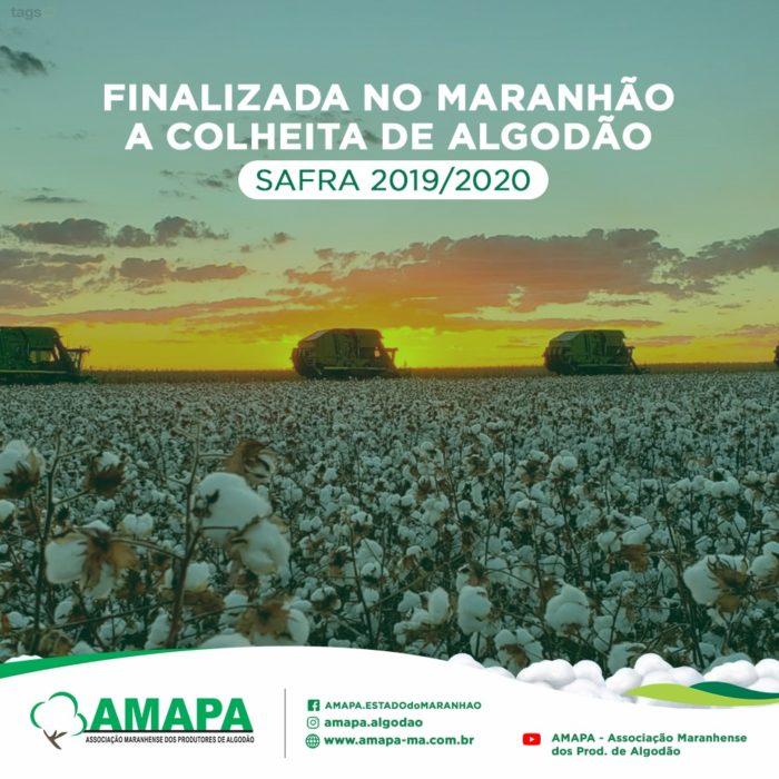 FINALIZADA NO MARANHÃO A COLHEITA DE ALGODÃO – SAFRA 2019/2020